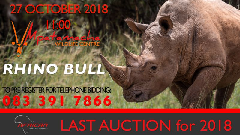 Rhino Bull on Auction