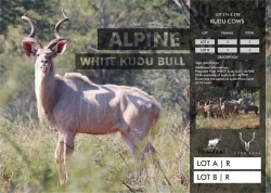 LOT 037 A & 037 B - NOT SOLD: R 12 000
